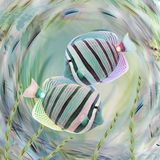 Tang Fish Abstract Stock Images