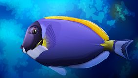 Tang Fish bleu dans l'océan Illustration de Vecteur