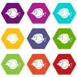 Tang fish, Zebrasoma flavescens icon set color hexahedron. Tang fish, Zebrasoma flavescens icon set many color hexahedron isolated on white vector illustration Royalty Free Stock Image