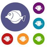 Tang fish, Zebrasoma flavescens icons set Stock Photography