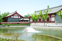 Tang Hibiscus Park Stock Photo
