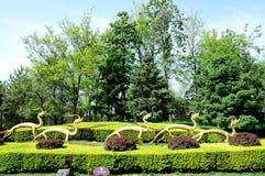 Tang Hibiscus Park Stock Photos