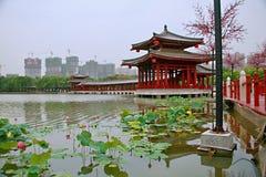 Tang Paradise fotografering för bildbyråer
