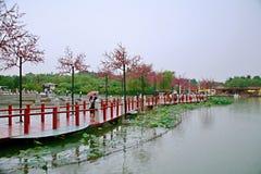 Tang Paradise royaltyfri bild