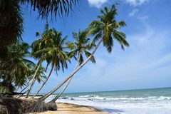 Tangalle beach. During beautiful trip to Sri Lanka Tangalle beach was place to go. Amazing nature, palms over your head and sound of the ocean in your ears Royalty Free Stock Image