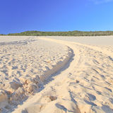Tangalooma sand hill Stock Photography
