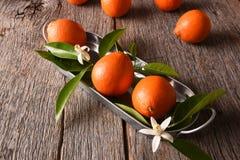 Tangelos p? ett metallmagasin med sidor och orange blomningar p? en lantlig tr?bakgrund fotografering för bildbyråer