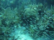 Tangentsmå fiskar Arkivfoto