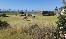 Tanger Fotografia Stock