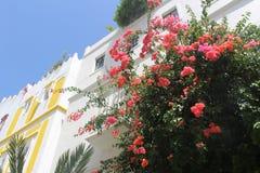 Tanger Kasbah la Médina Photographie stock