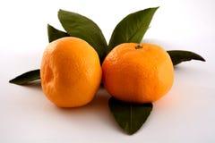 Tangerin för två apelsin Fotografering för Bildbyråer