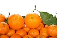Tangerin och apelsiner på vit bakgrund Arkivbilder