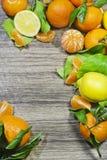 Tangerin- och citrongränsram Royaltyfri Foto