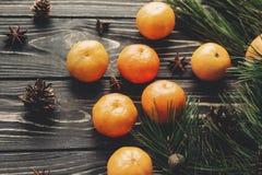Tangerin- och granfilialanis och sörjer kottar på lantlig woode royaltyfria foton