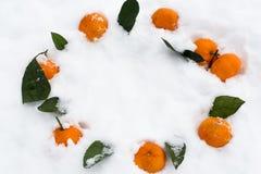 Tangerin på snöförkylningen Fotografering för Bildbyråer