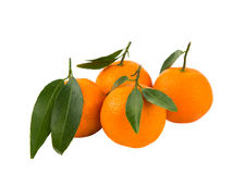 Tangerinas isoladas Foto de Stock