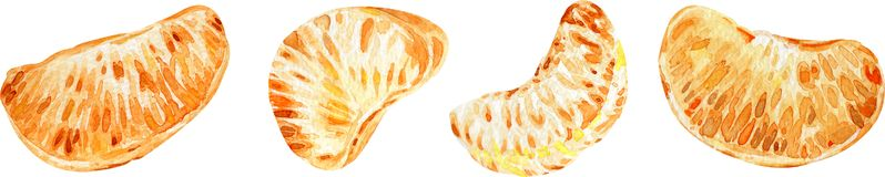 Tangerine φέτες τα εσπεριδοειδή ανασκόπ η διακοσμητική εικόνα απεικόνισης πετάγματος ραμφών το κομμάτι εγγράφου της καταπίνει το  ελεύθερη απεικόνιση δικαιώματος