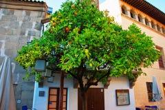 Tangerine δέντρο στο ισπανικό χωριό στο Montjuic στη Βαρκελώνη Στοκ Φωτογραφίες