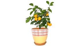 Tangerine δέντρο Στοκ Φωτογραφία