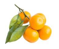 Tangerine στην άσπρη ανασκόπηση Στοκ φωτογραφίες με δικαίωμα ελεύθερης χρήσης