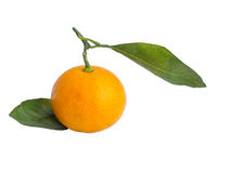 Tangerine στην άσπρη ανασκόπηση Στοκ φωτογραφία με δικαίωμα ελεύθερης χρήσης
