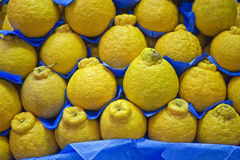 Tangerine στην εκτεθειμένη στάση φρούτων Στοκ φωτογραφία με δικαίωμα ελεύθερης χρήσης