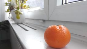 Tangerine στο windowsill Στοκ Εικόνα