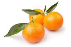 Tangerine τρία στοκ φωτογραφίες