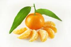 tangerine φύλλων Στοκ φωτογραφία με δικαίωμα ελεύθερης χρήσης