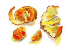 Tangerine акварели с коркой и некоторыми separeted кусками Стоковое фото RF