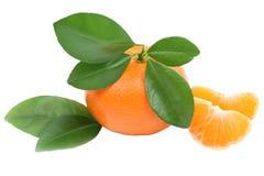 Tangerine плодоовощ апельсина мандарина при изолированные листья Стоковое Фото