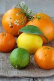 tangerine померанца известки лимона цитруса Стоковое Изображение RF