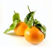 Tangerine с листьями Стоковая Фотография