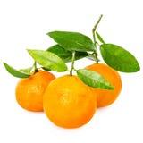 Tangerine с этапами стоковые фотографии rf