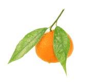 Tangerine. Isolated on white background Royalty Free Stock Image
