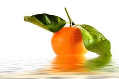 Tangerine. Fresh Isolated Tangerine in water with raindrops Royalty Free Stock Photo
