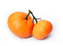Tangerine Imagem de Stock Royalty Free