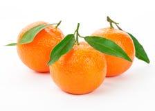 tangerine Стоковая Фотография RF