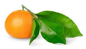 tangerine στοκ εικόνες
