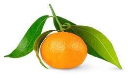 tangerine στοκ εικόνα