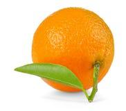 Isolated tangerine. One tangerine or mandarine orange with stem and leaves isolated on white background Royalty Free Stock Photography