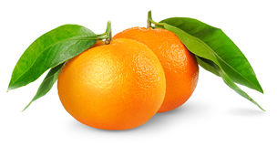 Isolated tangerines. Two tangerines or mandarin oranges isolated on white background Stock Photography