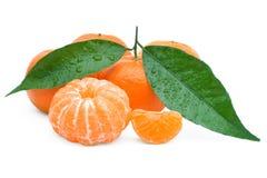 tangerine Arkivfoton