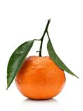 tangerine Arkivbilder
