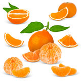 Tangerine. Collection of tangerine isolated on white Stock Photography