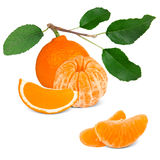 Tangerine. With leaves and slices isolated on white Stock Photos