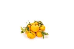Tangerine Obraz Stock