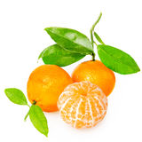 Tangerine с этапами стоковое фото rf