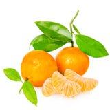 Tangerine с этапами стоковые фото