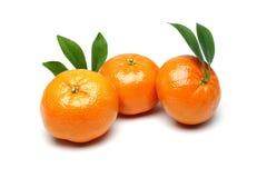 Tangerine στοκ φωτογραφία